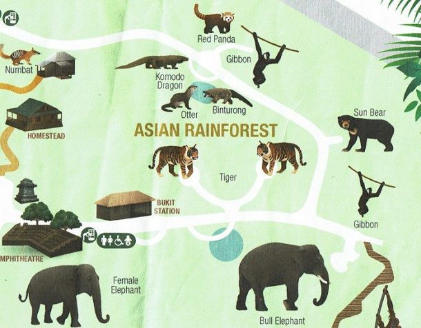 Asian Rainforest